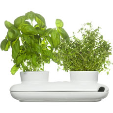 Grow your own herbs!