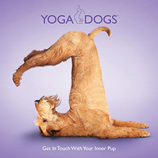Real photos of real dogs positioned in classic yoga postures!