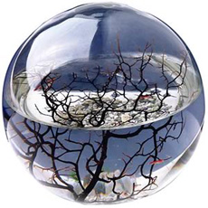 A miniature Ecosystem self contained in a crafted glass home. It's in a World of its own.