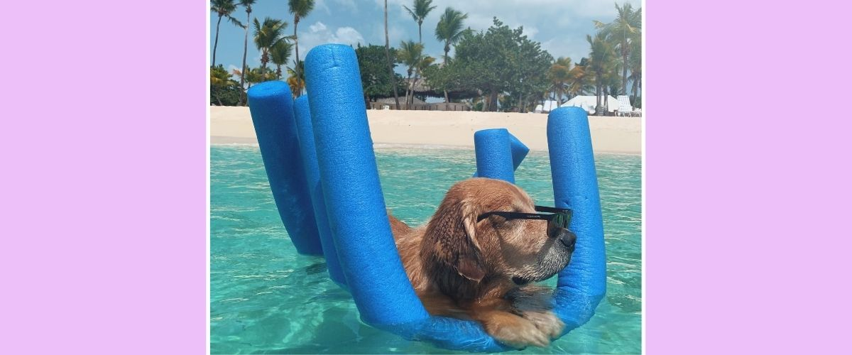 Dog with sunglasses chilling in a swimming pool.
