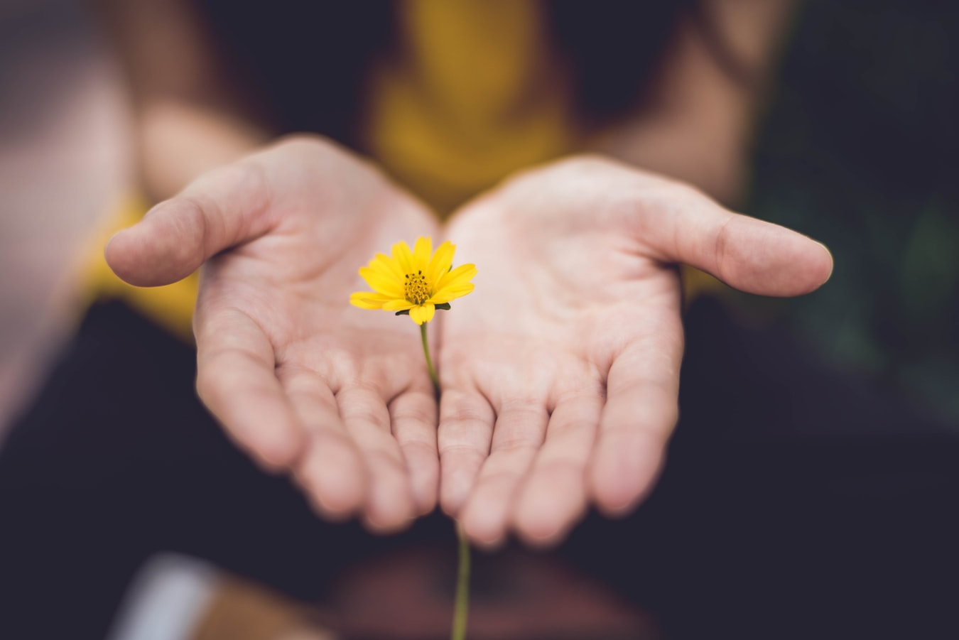 A closeup of a woman holding a yellow flower in her hands.